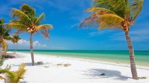 Coconut palms at beach